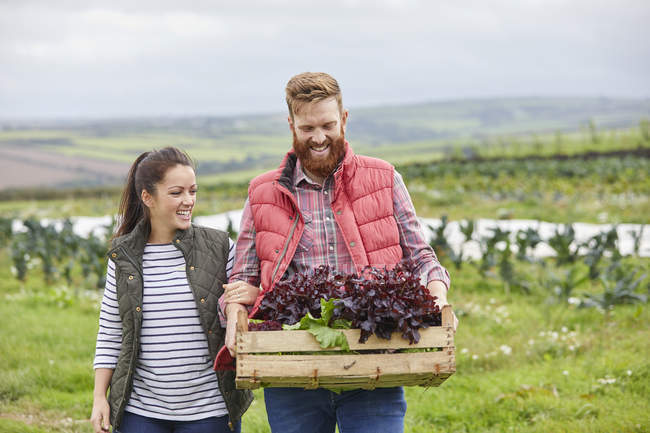 Couple on farm holding freshly harvested lettuce in wooden crate — Stock Photo