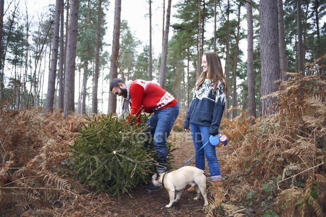 Jeune couple et chien levant arbre de Noël dans les bois — Photo de stock
