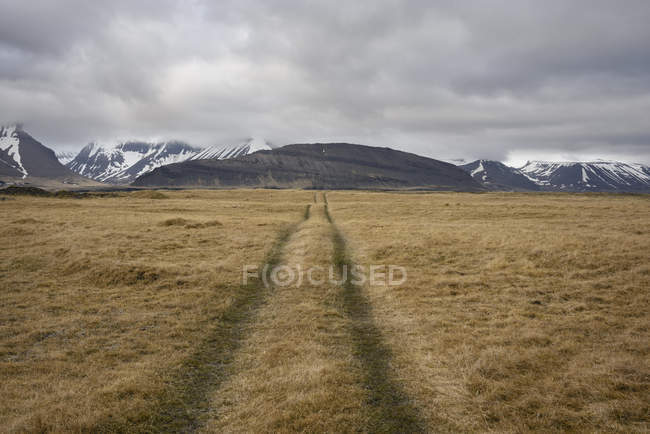 Faixas do veículo por meio do campo, Westfjords, Iceland — Fotografia de Stock