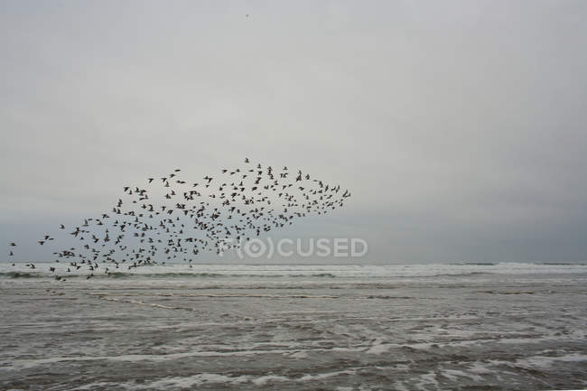 Flock of birds flying over water at dusk — Stock Photo