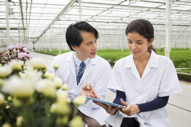 Man and woman with rows of plants growing in greenhouse — Stock Photo