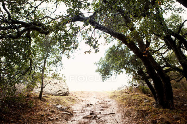 Dirt road leading out of forest — Stock Photo