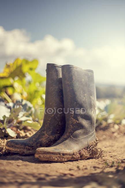 Stivali di gomma sporca sul terreno del giardino — Foto stock