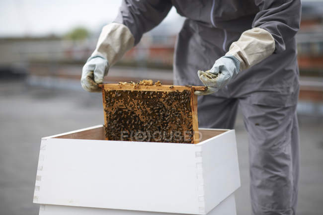 Beekeeper removing hive frame from hive, mid section — Stock Photo