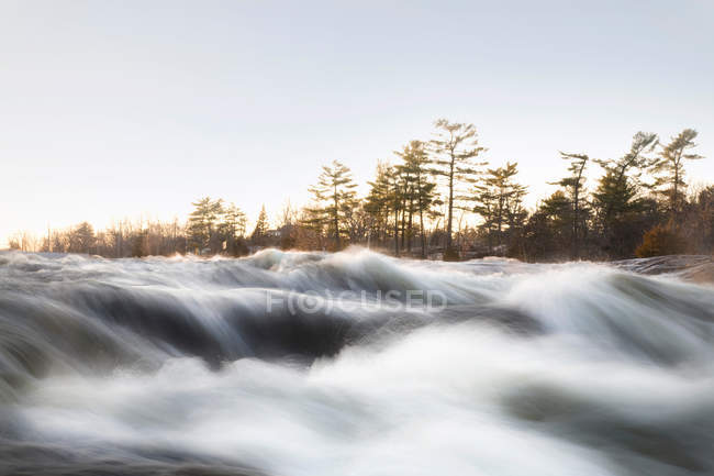 Fast flowing river with forest on background — Stock Photo