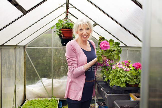 Mature woman tending flowers in greenhouse — Stock Photo