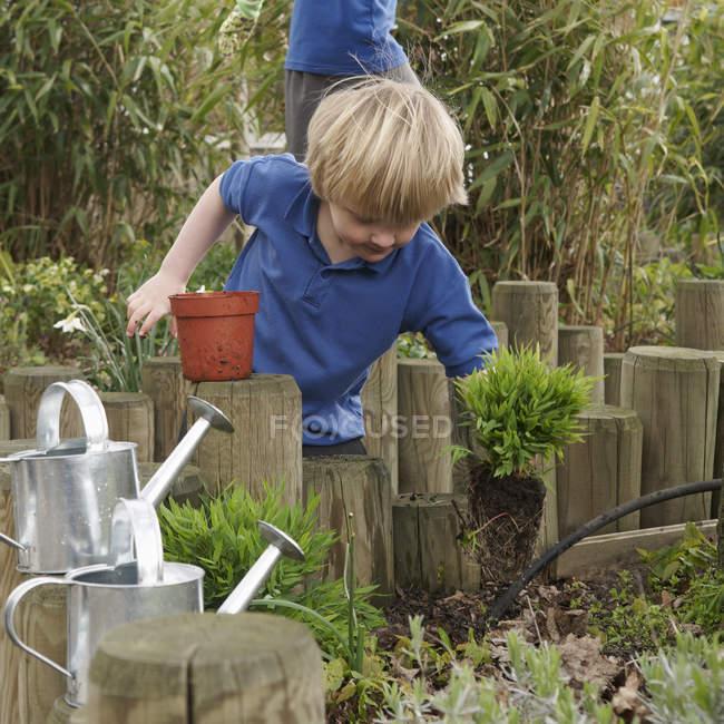 School boy removing plants from pot in garden — Stock Photo