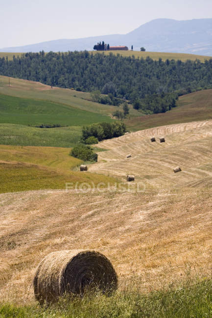 Field with hay bales, Val d'Orcia, Siena, Tuscany, Italy — Stock Photo