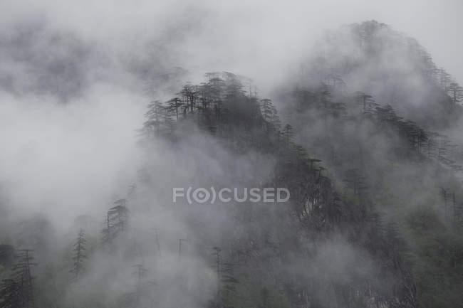 Colinas cubiertas de niebla, Durmitor, Montenegro - foto de stock