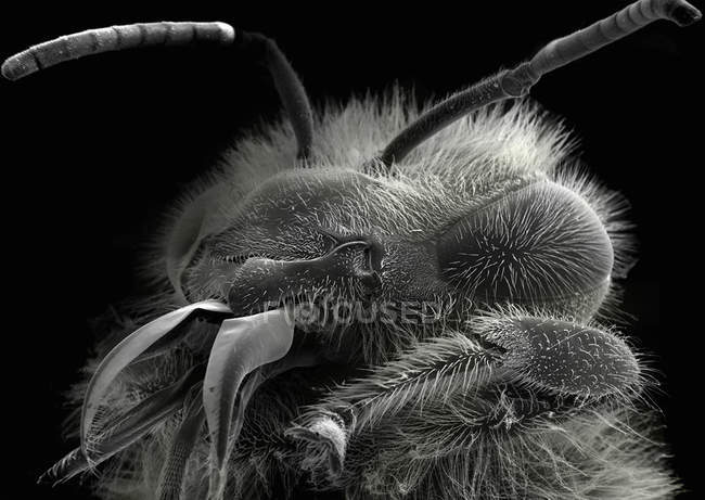 Scanning electron micrograph of bee head — Stock Photo