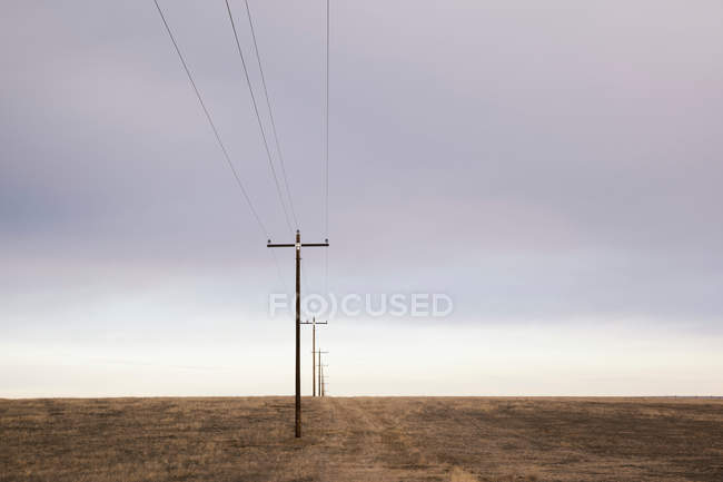 Electricity power cables and poles in dry landscape — Stock Photo