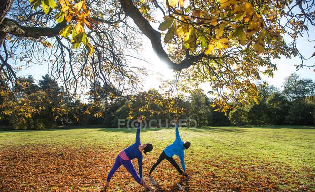 Две женщины занимаются йогой в парке осенью — стоковое фото