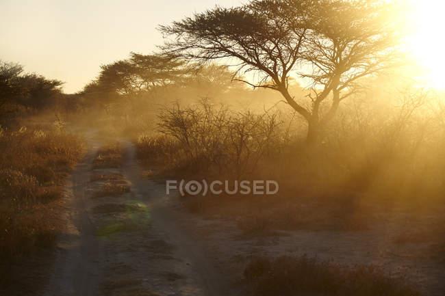 Dusty arid plain and backlit trees at sunset, Namibia, Africa — Stock Photo