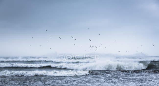 Vogelschwarm über Surf Wellen fliegen — Stockfoto