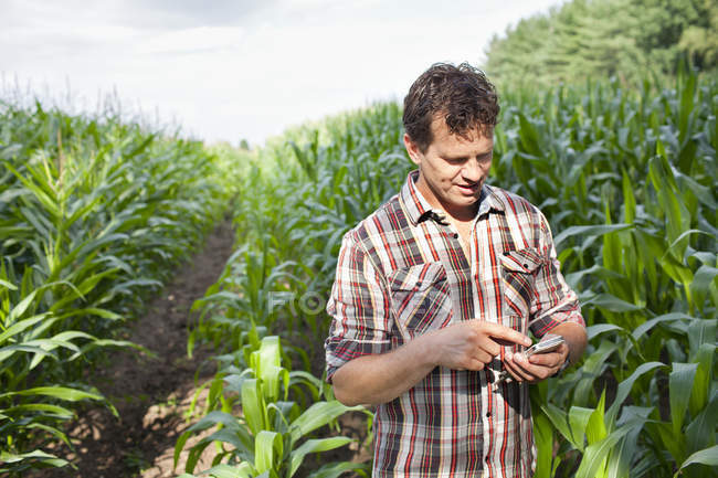 Farmer standing in field of crops using smartphone — Stock Photo