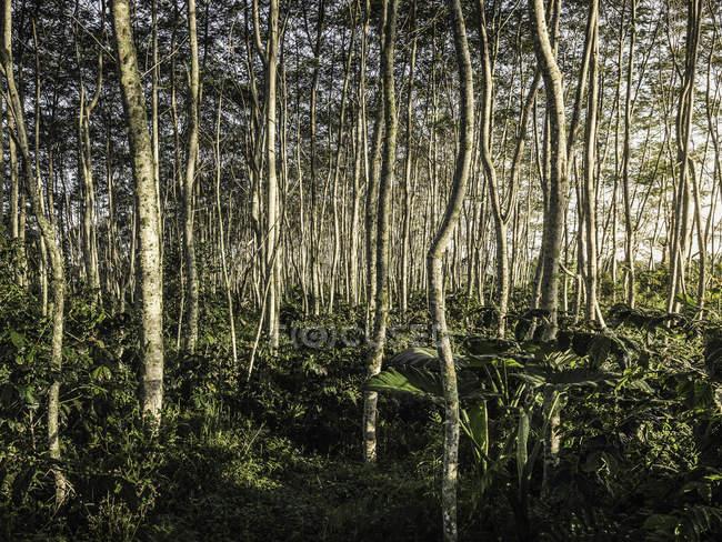 Árboles iluminados por el sol del bosque tropical - foto de stock