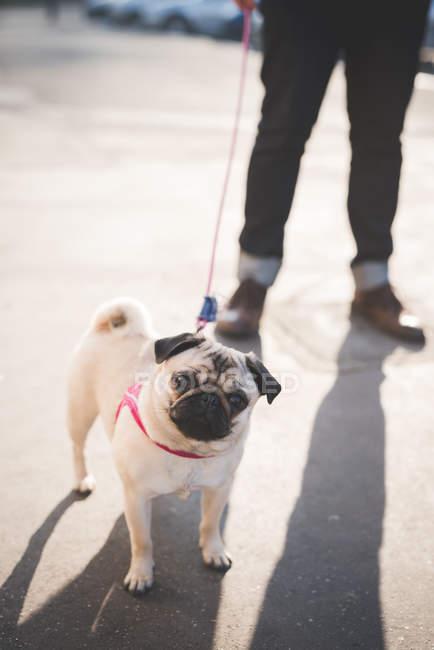 Young man walking dog on street — Stock Photo