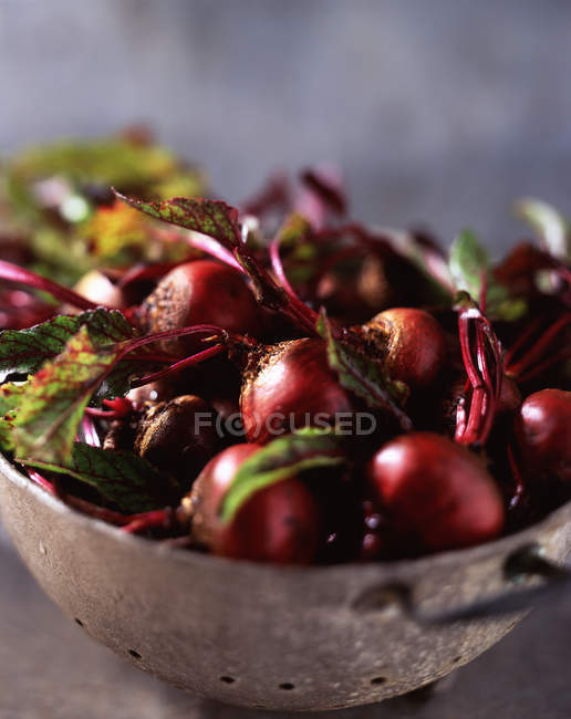 Food, vegetables, raw beetroot with leaves in colander — Stock Photo
