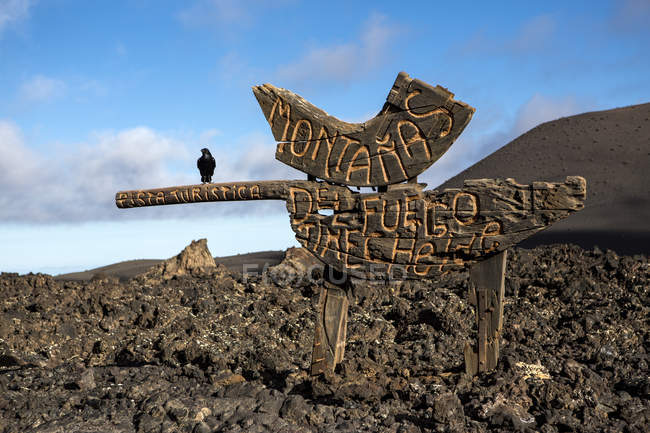 Crow bird perched of wooden sign at Timanfaya National Park, Lanzarote, Canary Islands — Stock Photo