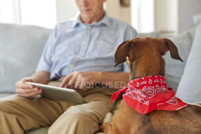 Je regarde tablette numérique utilisation de propriétaire de chien — Photo de stock