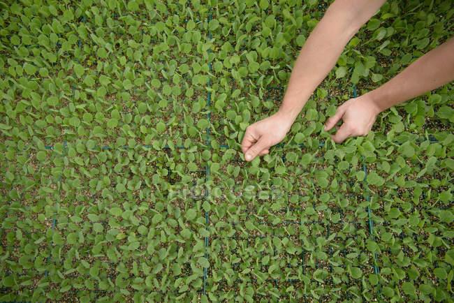 Farmer planting seedlings on organic farm, close up — Stock Photo