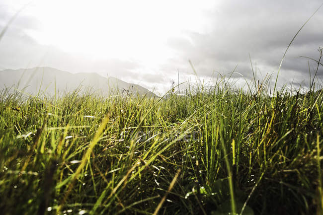 Close up shot of green grass with mountains on distant — Stock Photo
