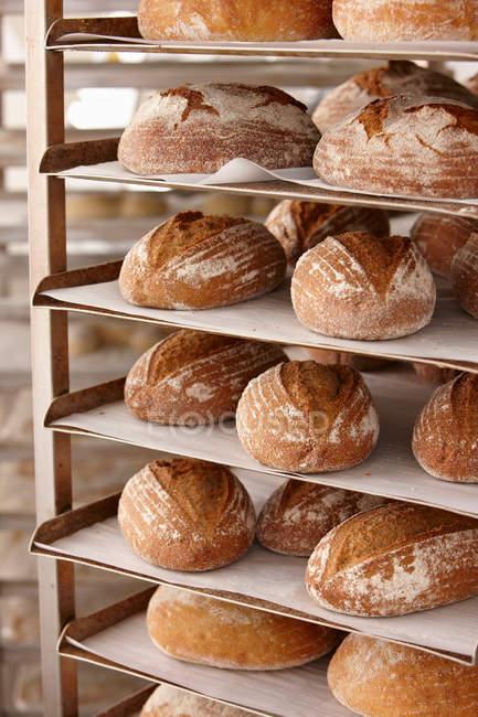 Pan de panes en la bandeja de enfriamiento en panadería - foto de stock