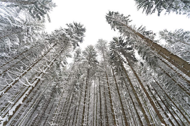 Bottom view of bavarian forest national park, germany — Stock Photo