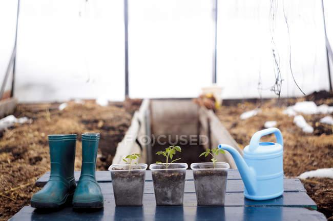 Plántulas con botas wellington y regadera - foto de stock