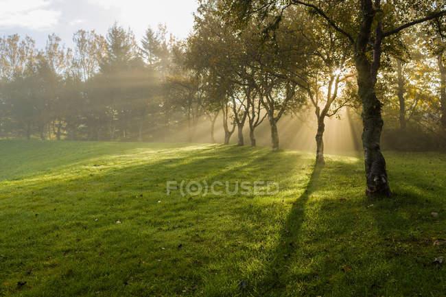 Soleil qui brille à travers les arbres — Photo de stock