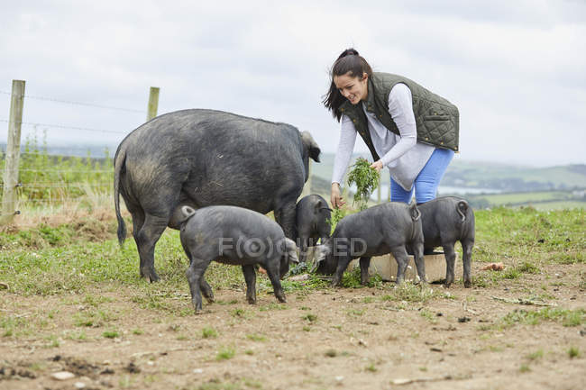 Woman on farm feeding pig and piglets — Stock Photo