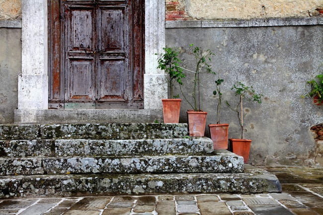 Flower pots on front steps and shabby doorway — Stock Photo