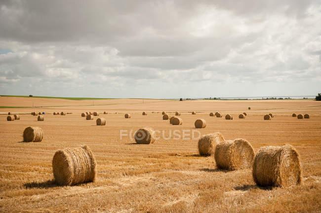 Balles de foin rondes dans le champ — Photo de stock