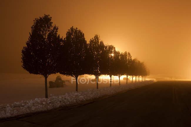 Row of trees at night — Stock Photo