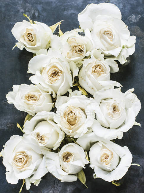 Top view of white roses on concrete surface — Stock Photo