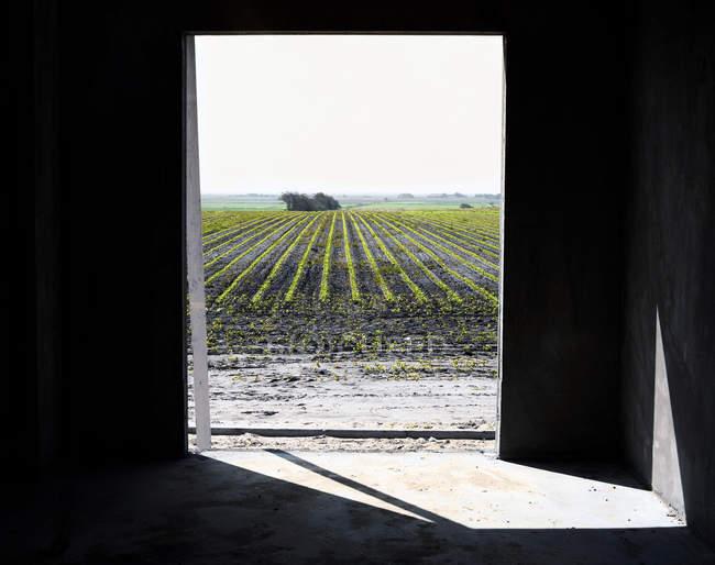Виноградник через дверной проем — стоковое фото