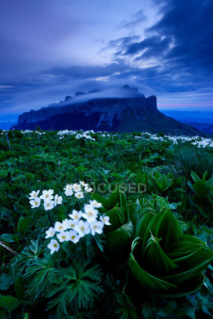 Wildflowers and rock formation,  Bolshoy Thach Nature Park, Caucasian Mountains, Republic of Adygea, Russia — Stock Photo