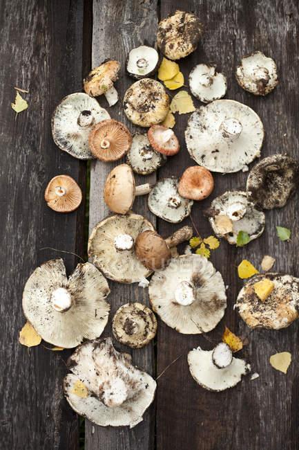 Setas silvestres en suelo de madera - foto de stock