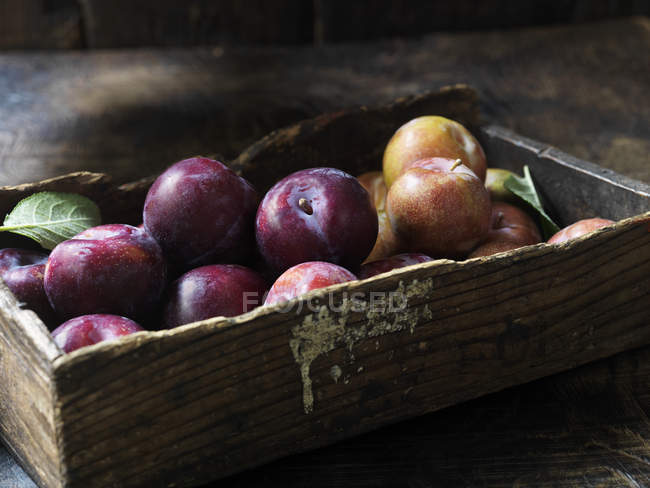 Close up of Fresh organic fruit, plums and apples in crate — Stock Photo