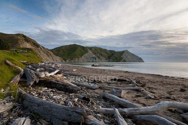 Logs and driftwood on sandy beach — Stock Photo