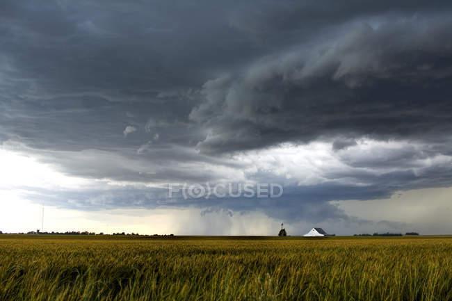 Nubi di tempesta sopra il campo di frumento e distante fienile — Foto stock