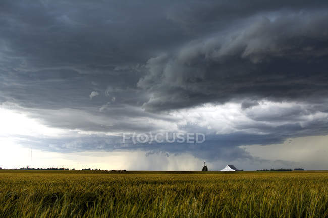 Storm clouds over wheat field and distant barn — Stock Photo