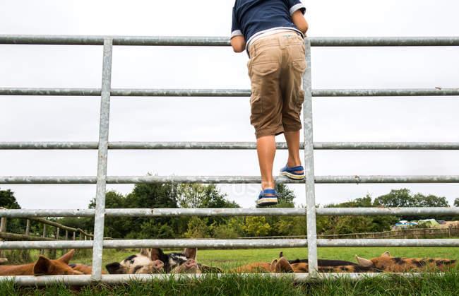 Garçon escalade porte pour voir les porcs à la ferme — Photo de stock