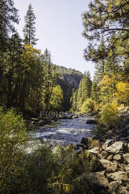 Vista del paisaje con bosque río y árboles verdes - foto de stock