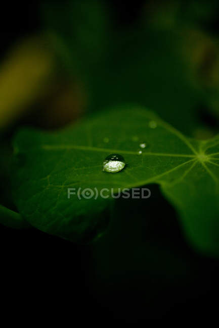 Close up of Water droplet on leaf — Stock Photo