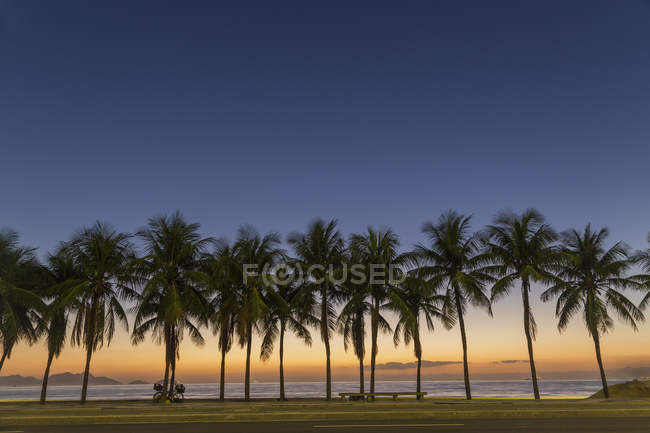 Linha das palmeiras na praia ao pôr do sol — Fotografia de Stock