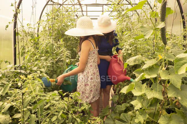 Zwei Weibchen tragen Sonnenhüte, mit Gießkanne Wasser Pflanzen im Gewächshaus — Stockfoto