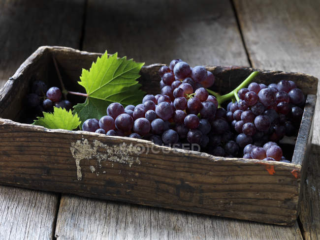 Fresh picked grapes with leaves in wooden box — Stock Photo
