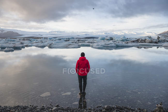 Rear view of male tourist looking out at icebergs on glacial lagoon, Jokulsarlon, Iceland — Stock Photo