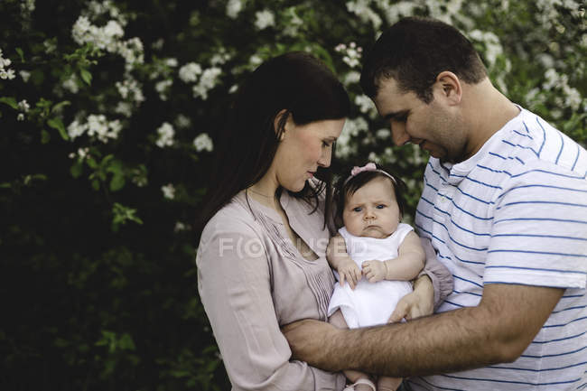 Portrait of baby girl carried between mother and father by garden apple blossom — Stock Photo